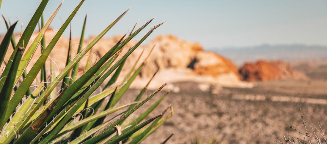 arid desert climate of Las Vegas